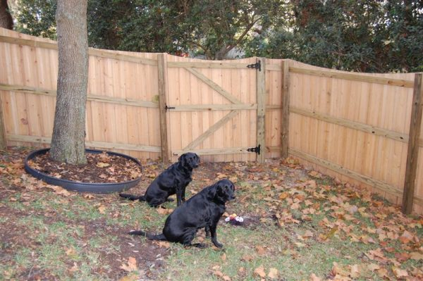 wood fence and two dogs